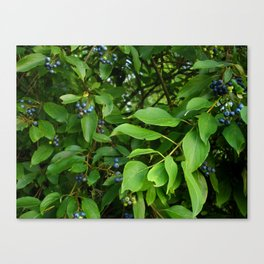 August Blue Canvas Print