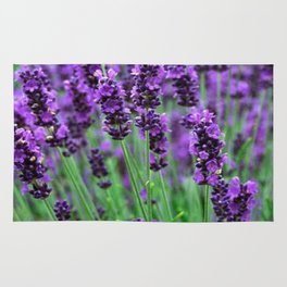 Lavender colors... Rug