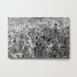 Dandelion Spring Showers Metal Print