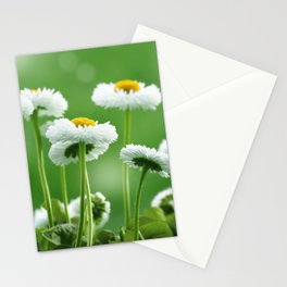 Daisy Flowers 094 Stationery Cards