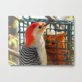 Woodpecker lunchtime! Metal Print