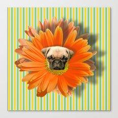 Pistil Pug Canvas Print
