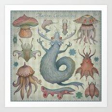Marine Curiosities II Art Print