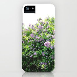 Angle Of The Lilac Bush iPhone Case