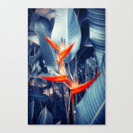 Tropical Parakeet Flower Canvas Print