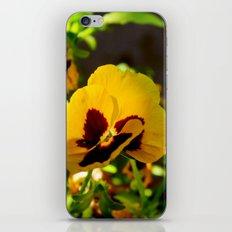 Viola tricolor garden iPhone & iPod Skin