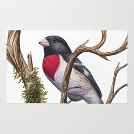 Rose-breasted Grosbeak (Pheucticus ludovicianus) Rug