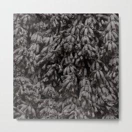 Dead Lavender in Monochrome Metal Print