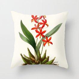 Epidendrum Selenium Vintage Scientific Botanical Flower Illustration Hand Drawn Art Throw Pillow
