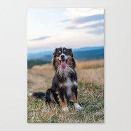 Australian Sheep Dog Canvas Print