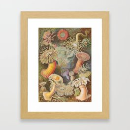 Anemones Framed Art Print