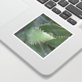 Agave Pads & Spines Sticker