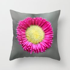 Blossom from a Daisy Isolated on Gray Background Throw Pillow