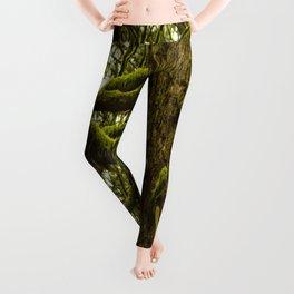 Mossy Trees Leggings