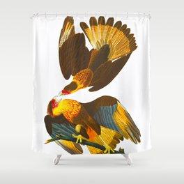 Caracara Eagle Illustration Shower Curtain