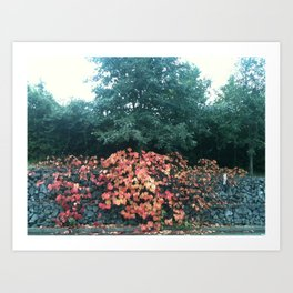 As autumn shows its face Art Print