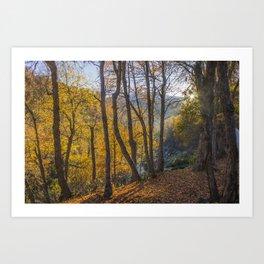 Oaks in the morning Art Print