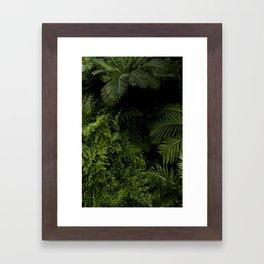 Tropical jungle. Framed Art Print