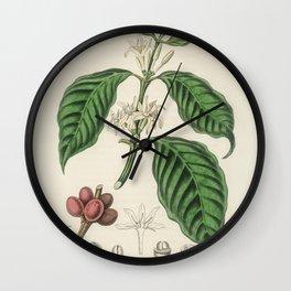 Coffea arabica  from Medical Botany (1836) by John Stephenson and James Morss Churchill Wall Clock