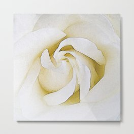 247 - one white rose Metal Print