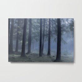 Forest atmosphere - Kessock, The Highlands, Scotland Metal Print