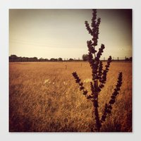 wisconsin Canvas Prints featuring Wisconsin Prairie  by Josrick