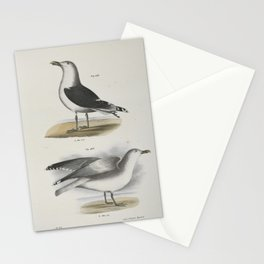1395 283 The Great Black backed Gull (Larus marinus) 284 The Winter Gull (Larus argentatus)26 Stationery Cards