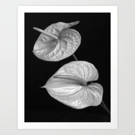 Zwei Blumen im Raum Art Print
