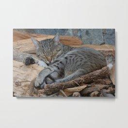 Cats-Pipo Metal Print