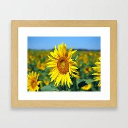 Summer Sunflowers Framed Art Print