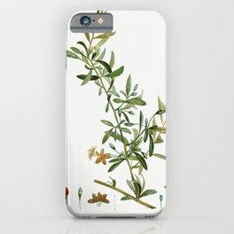 Goji berry (Lycium turbinatum) from Traite des Arbres et Arbustes que lon cultive en France en plein iPhone Case