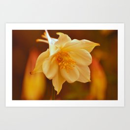 Columbine Beauty Art Print