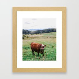 Brown Cow At the Farm in Vermont's Green Mountain Nature Framed Art Print