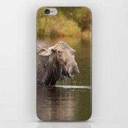Smiling Moose iPhone Skin