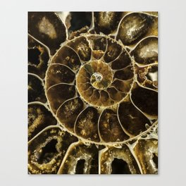 Detailed Fossil Canvas Print