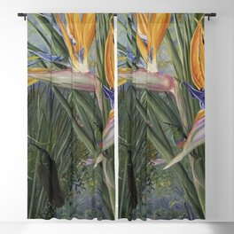 Bird of Paradise orchid flowers and Hummingbirds still life painting Blackout Curtain