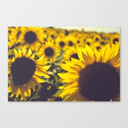 Summer Sunflower Love Canvas Print