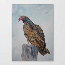 Turkey Vulture on post Canvas Print