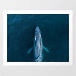 Blue Whale Exhale Art Print