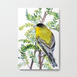 Lesser Goldfinch Bird Watercolor Art Metal Print