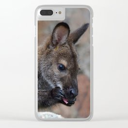Baby Wallaby Cleaning Himself Clear iPhone Case