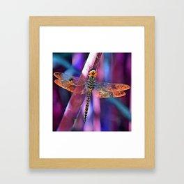 Dragonfly In Orange and Blue Framed Art Print