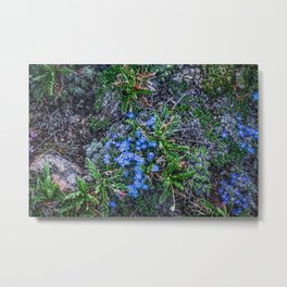 Blue Flowers at the Top of the World Metal Print