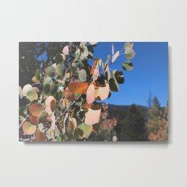 Aspen Leaves, Colorado Metal Print