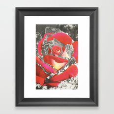 Exploded Rose Framed Art Print