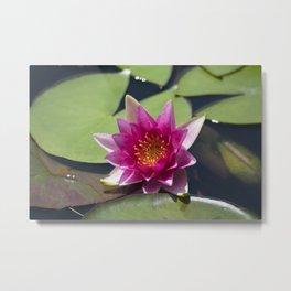 Longwood Gardens - Spring Series 305 Metal Print