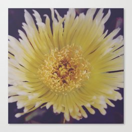 Buttery Botany Canvas Print