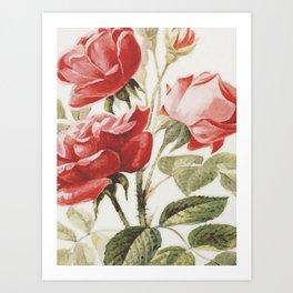 Vintage Botanical No. 4 Art Print