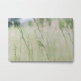 Peaceful fields ... Metal Print