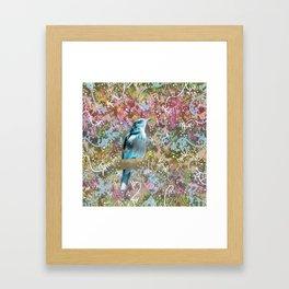 Little Scrub Jay Framed Art Print